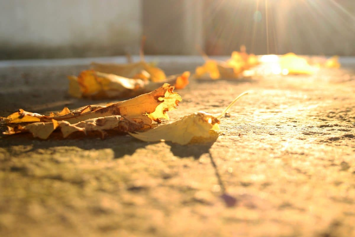 Concrete maintenance tips for fall